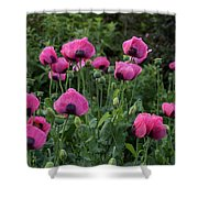 Shell Shaped Poppies Shower Curtain