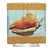 Shell Shocked Shower Curtain