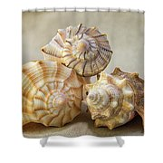 Shell Still Life Shower Curtain
