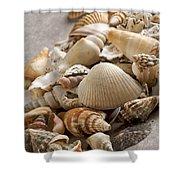 Shellfish Shells Shower Curtain