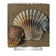 Shells 1 Shower Curtain