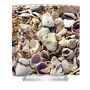 Shells Aplenty Shower Curtain
