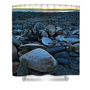 Shells At Sunrise  Shower Curtain