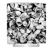 Shells Shower Curtain