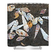 Shells From The Sea Of Galilee Shower Curtain