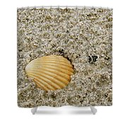 Shells In The Sand Shower Curtain