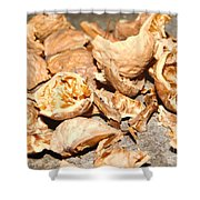 Shells Of Nut Shower Curtain