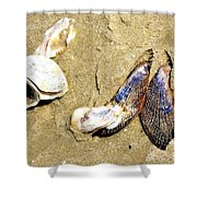Shells On The Beach Of Jekyll Shower Curtain
