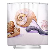 Shells Still Life Shower Curtain