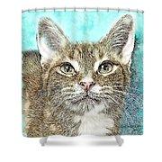 Shelter Cat Fantasy Art Shower Curtain