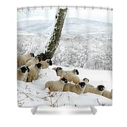 Sheltering Flock Shower Curtain