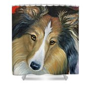 Sheltie - Collie Shower Curtain