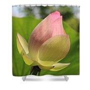 Sherbert Flower Shower Curtain