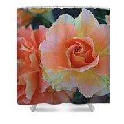 Sherbert Rose Shower Curtain
