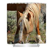 Shiloh Shower Curtain