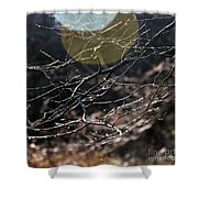 Shimmering Branches Shower Curtain