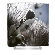 Shimmering Flower II Shower Curtain by Ray Laskowitz - Printscapes