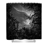 Shimmering Tree Branches Shower Curtain
