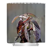 Shimmering Wings- Dragonfly Shower Curtain