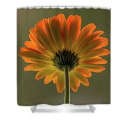 Shine Bright Gerber Daisy Square Shower Curtain
