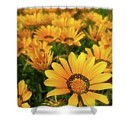 Shine Brighter Together Shower Curtain