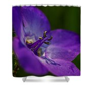Shine On Me Shower Curtain