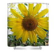 Shine Sunflower Shine Shower Curtain