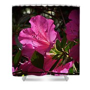 Shining Azalea Shower Curtain