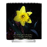 Shining Daffodil Shower Curtain
