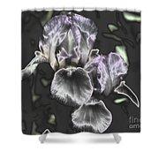 Shiny Irises Shower Curtain