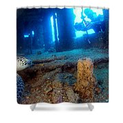Shipwrecked Turtle Shower Curtain