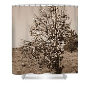Shoe Tree In Sepia Shower Curtain