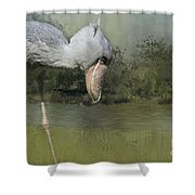 Shoebill Looking For Food Shower Curtain