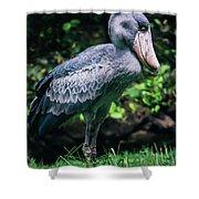 Shoebill Stork Side Portrait Shower Curtain