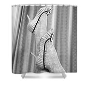 Shoes #6088 Shower Curtain
