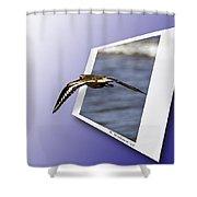 Shore Bird In Flight Shower Curtain