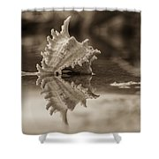 Shore Shell In Sepia Shower Curtain