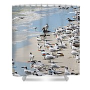 Shorebird Gathering Shower Curtain