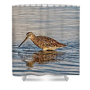 Short-billed Dowitcher Shower Curtain