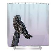 Short-eared Owl 2018-5 Shower Curtain