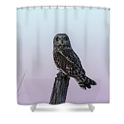Short-eared Owl 2018-6 Shower Curtain