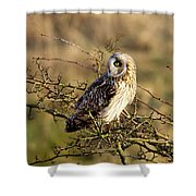 Short-eared Owl In Tree Shower Curtain