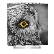 Short-eared Owl Mono Coloured Eye Shower Curtain