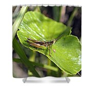Short Winged Green Grasshopper Shower Curtain