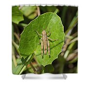 Shortwinged Green Grasshopper Shower Curtain