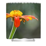 Show Up Shower Curtain
