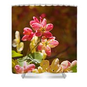 Shower Tree Blossoms Shower Curtain