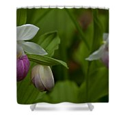Showy Impressions Shower Curtain