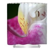 Showy Ladyslipper Up Close And Personal Shower Curtain