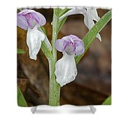 Showy Orchis Shower Curtain